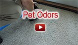 pet odors carpet cleaning
